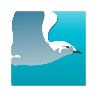 Juliste: Merenkurkun innoittamaa tutkistelua.