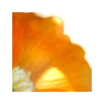 Kirja: Artikkeleita maamme arvostetuilta asiantuntijoilta rehtori Aino Sallisen juhlakirjassa. Juhlakirja kuvitettiin valokuvaaja Jaana Kauton kasviaiheisin kuvin.